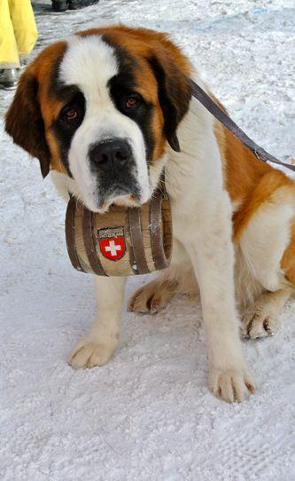 Snow Rescue Dogs Barrel