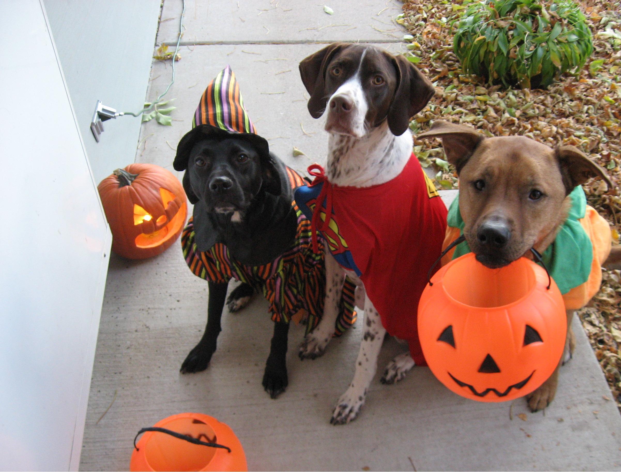 halloween dogs - Happy Halloween Com